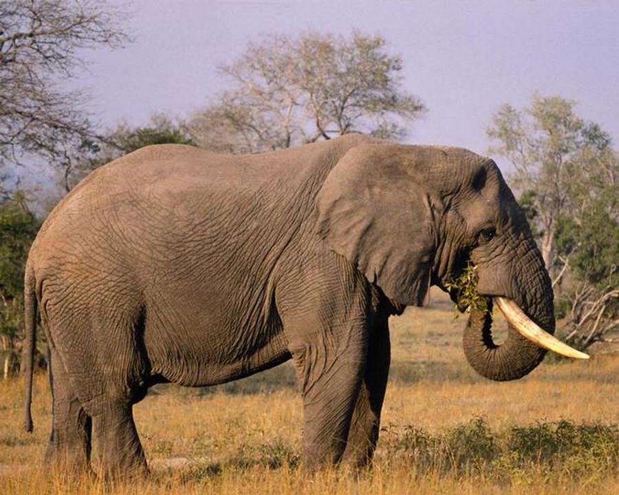 Animaux de la savane - Animaux savane africaine ...